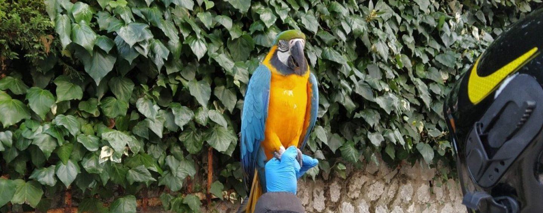 Avellino, scappa pappagallo e si rifugia su albero: recuperato dai vigili del fuoco