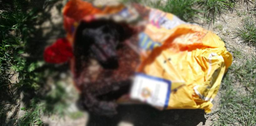 Orrore ad Aiello del Sabato, trovata carcassa di cane in un sacchetto di mangimi