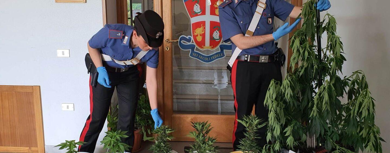 Coltiva piante di marijuana nel giardino di casa: denunciato 57enne