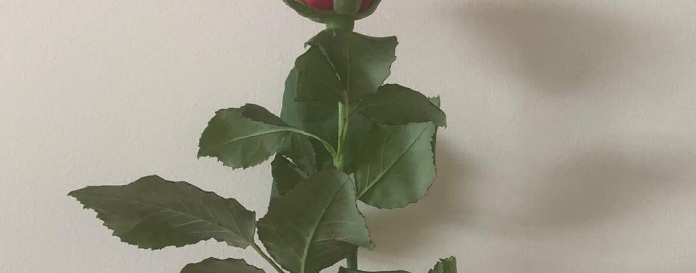 """Guarito dal Covid-19, il figlio ringrazia gli """"eroi"""" del Moscati con rose rose: """"Avete fatto un miracolo"""""""