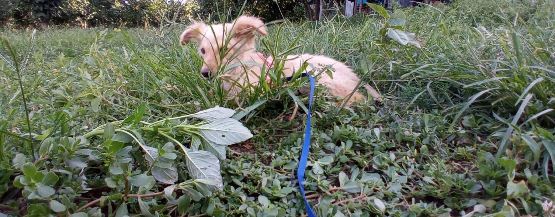 Salviamo Trudy, il cane-palo della rapina di Valle