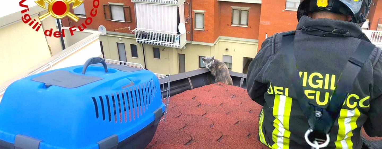 Avellino, gatto in bilico su una grondaia: salvato dai vigili del Fuoco