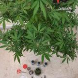 Avellino: 19enne arrestato per detenzione di sostanze stupefacenti