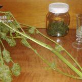 Ritrovato con mezzo etto di marijuana nascosto in cucina: 17enne del serinese in cella