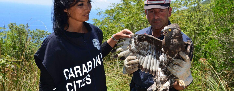 Carabinieri Forestale, l'impegno a protezione della flora e fauna a rischio di estinzione