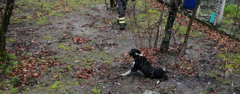Cesinali, i caschi rossi salvano un cane investito il giorno di Natale