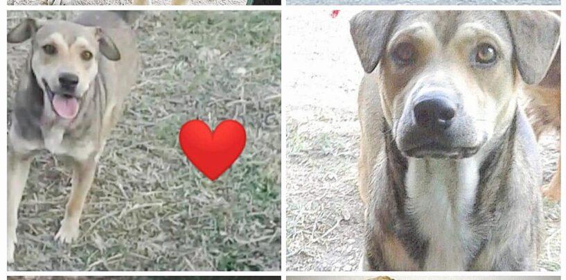 Maltrattamento cani: il Comune di Montemiletto si costituisce parte civile