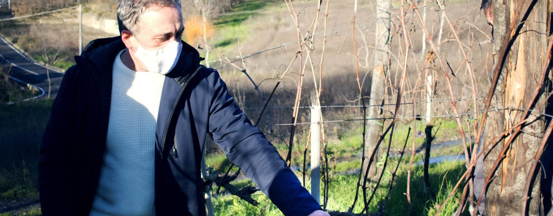 Il Covid non ferma i corsi di potatura, formazione in sicurezza grazie al Consorzio di Tutela Vini d'Irpinia