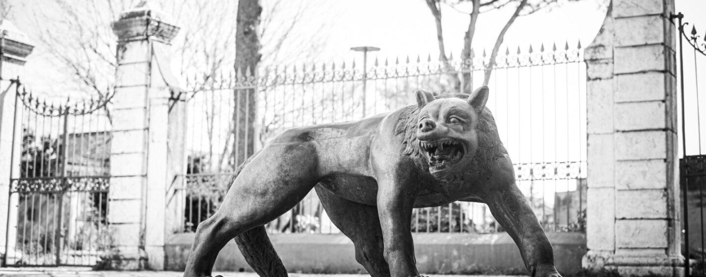 FOTO / Ad Avella i lupi di Liu Ruowang