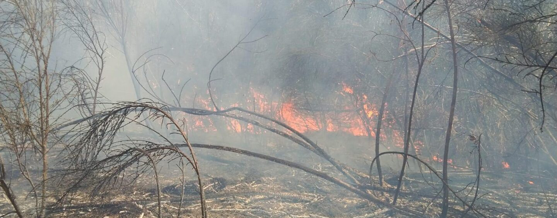 FOTO / Forino, fiamme sul monte Faliesi: in campo la Protezione civile