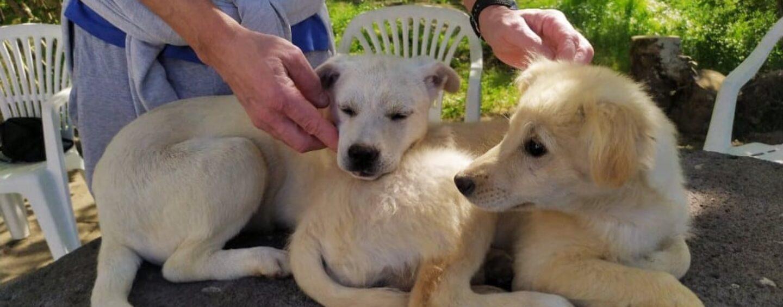 Pronte per essere adottate le due cagnoline avvelenate e abbandonate a Bellizzi: ora hanno bisogno dell'amore di una famiglia/VIDEO