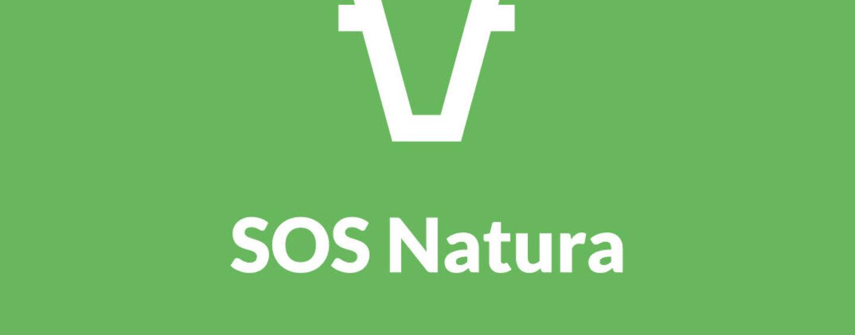 """Partenio, il decreto """"cattura cinghiali"""" non convince SOS Natura"""