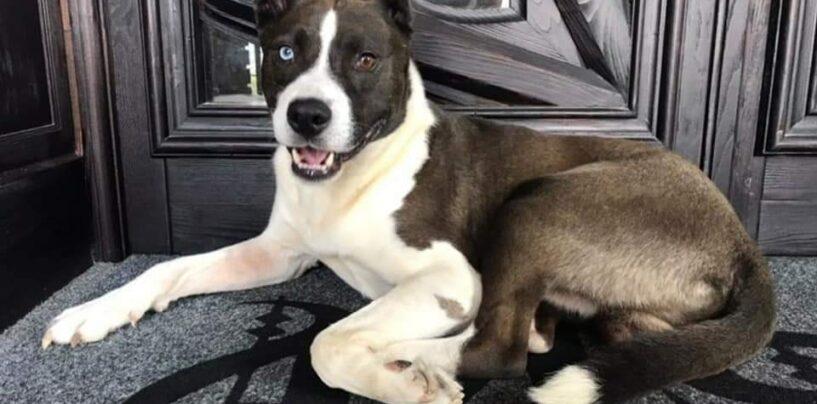 Manocalzati, Sos a quattro zampe: cane smarrito cerca casa