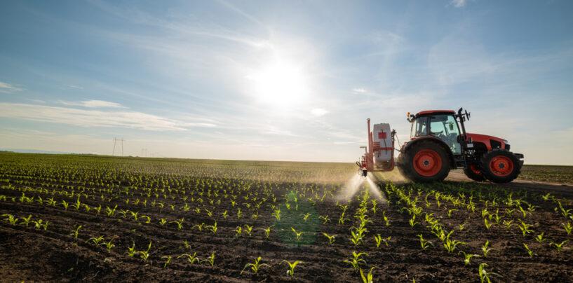 Il PNRR in Campania finanzia l'overbooking del vecchio Piano di Sviluppo Rurale: 641 milioni per 2.478 progetti