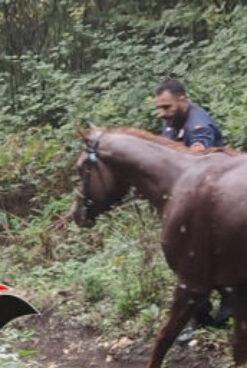 Cavallo imbizzarrito crea panico tra la gente e finisce in un dirupo: salvato