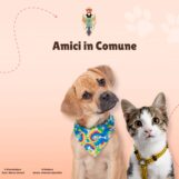 """""""Amici in Comune"""": a Grottolella fatti adottare 25 cagnolini, altri 28 attendono l'affido"""