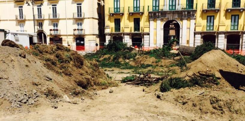 Avellino, abbattuto il cedro di piazza Libertà: monta la protesta in città