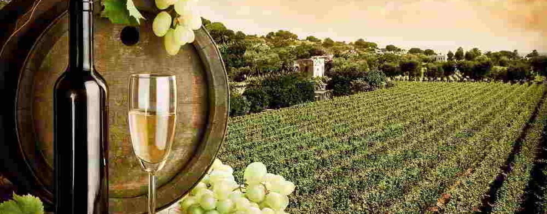 Le eccellenze vitivinicole regine delle sagre in Campania