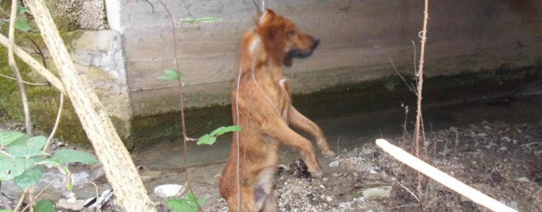 Cane impiccato a Montemiletto, l'Enpa pronta a presentare denuncia