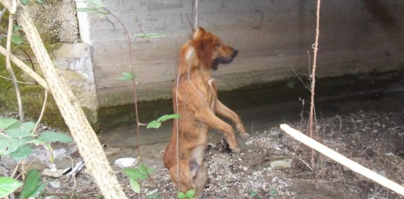 Orrore a Montemiletto, ritrovato un cane impiccato.