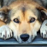 Cane abbandonato e ferito, aperta una raccolta fondi: salviamo Ridge