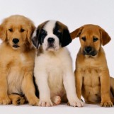 Oggi giornata mondiale degli animali. In Italia uno per ciascun abitante