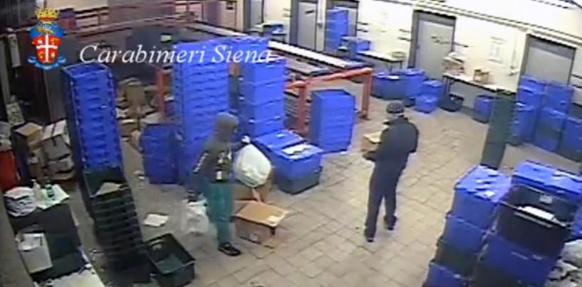 Sgominata banda che rubava antitumorali: aveva colpito a Venticano
