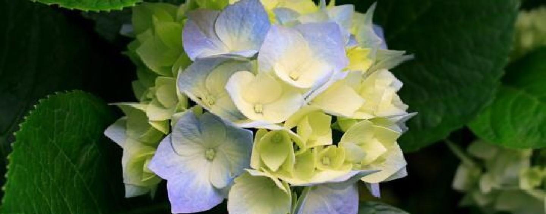Garden Club Verde Irpinia Avellino stipula accordo per adottare il Giardino degli odori