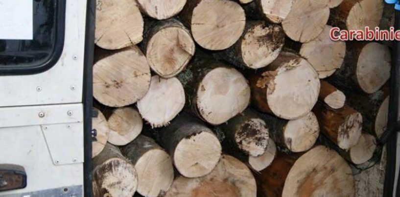 Furto aggravato di legna: 65enne nei guai