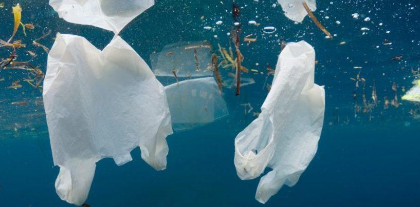 Estate, un mare di plastica: Campania sempre più maglia nera
