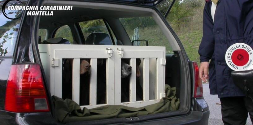 Bracconaggio e maltrattamento animali in provincia di Avellino, i carabinieri denunciano 6 persone