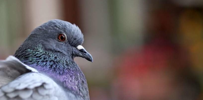 Io,il corso di Avellino,mio figlio,le giostre in villa e… i piccioni