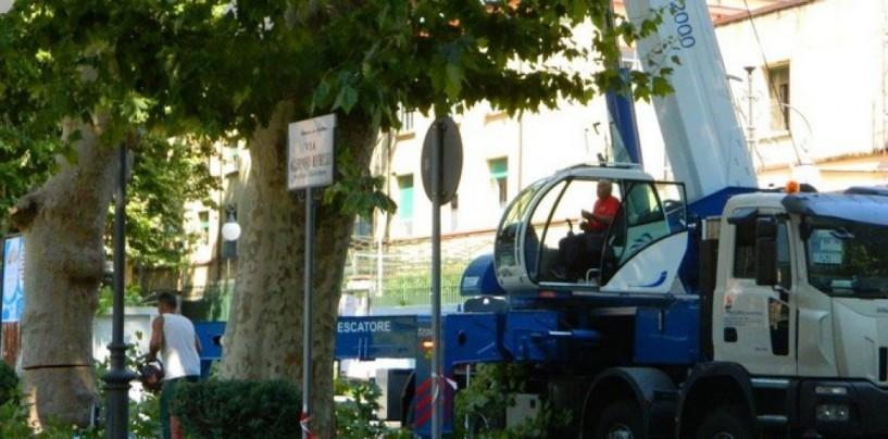 Continua l'abbattimento dei platani ad Avellino, le disposizioni sul traffico della Polizia Municipale