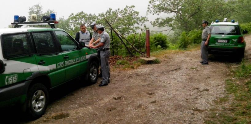 Strada abusiva tra i boschi di un'area protetta, scatta la denuncia per un imprenditore