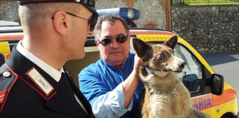 Pratola, cane cade in un'intercapedine tra due palazzi: salvato dai carabinieri e caschi rossi