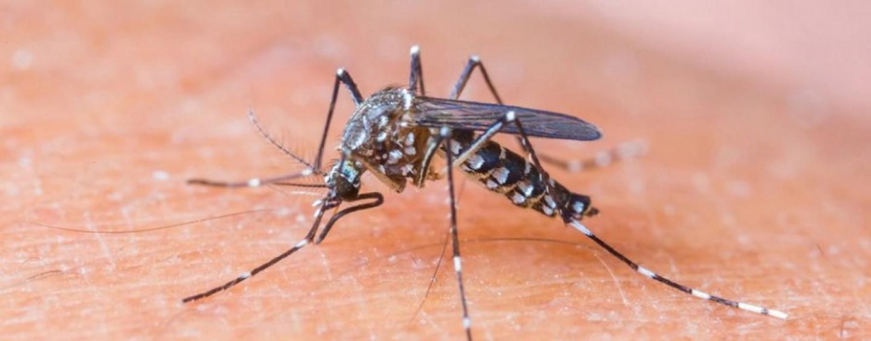 Programmata la disinfestazione in città contro zanzare e mosche